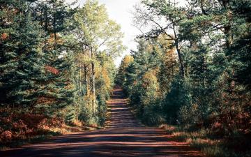 обоя природа, дороги, дорога, проселочная