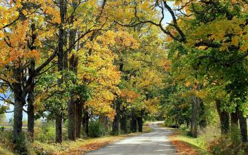 обоя природа, дороги, осень, деревья, дорога, проселочная