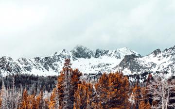 обоя природа, горы, лес, вершины, снежные
