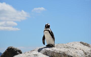 обоя животные, пингвины, пингвин