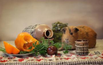 обоя животные, морские свинки,  хомяки, февраль, композиция, праздник, морская, свинка