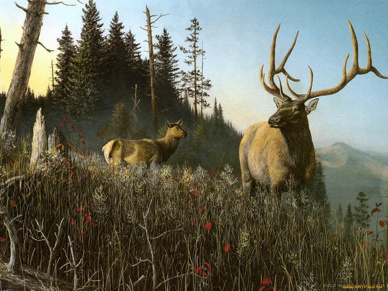 Днем рождения, картинка с охотником и оленями