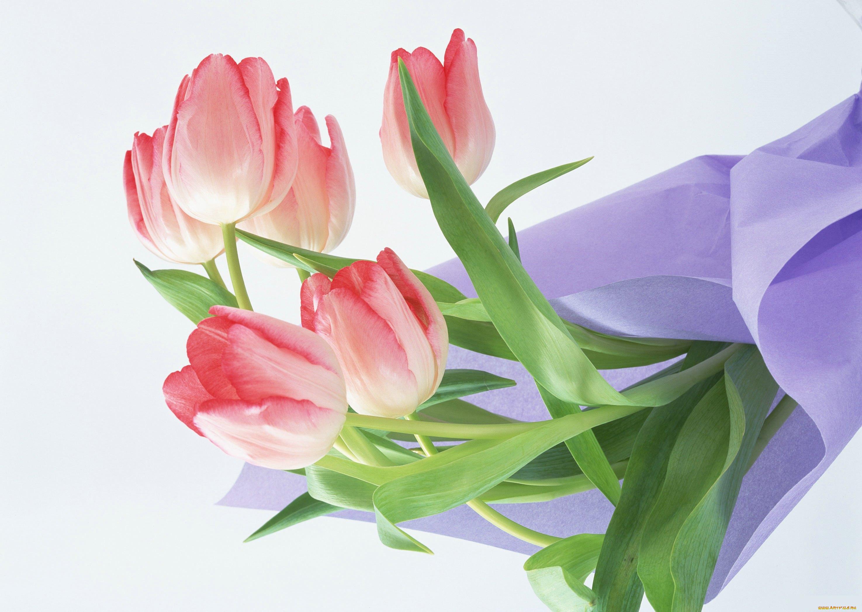 Открытки с тюльпанами без надписей, картинки лудшая открытка