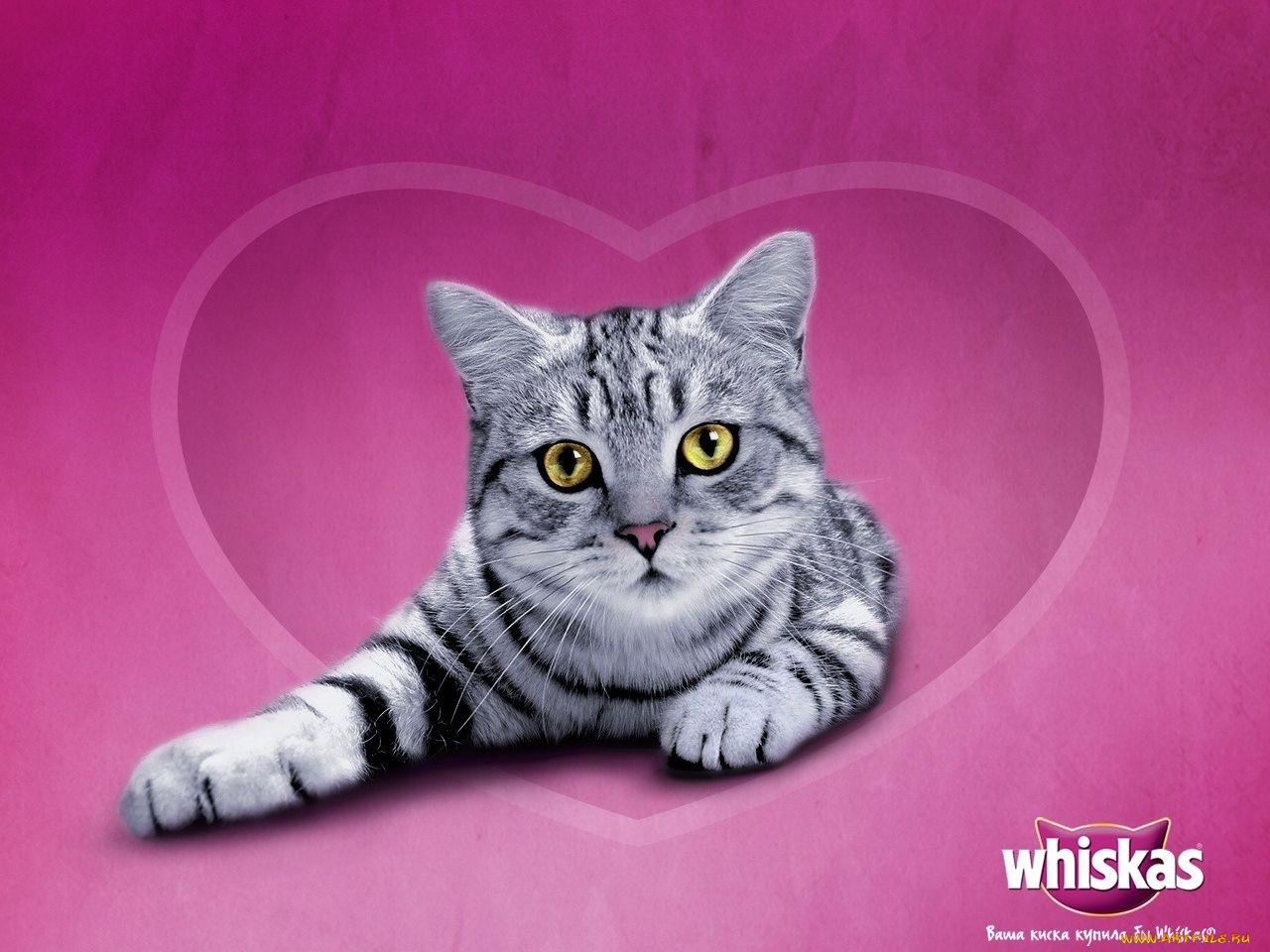 Вискас картинки с кошками