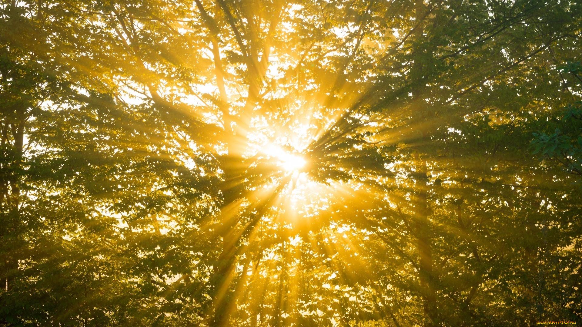 Спокойной, картинки с солнышком фото
