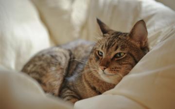 обоя животные, коты, отдых