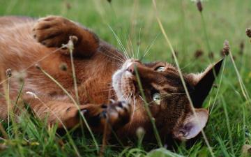 обоя животные, коты, трава