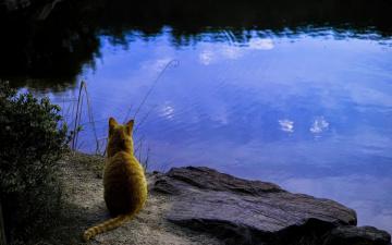 обоя животные, коты, водоем