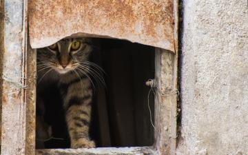 обоя животные, коты, взгляд