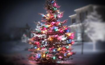 Картинка праздничные Ёлки елка