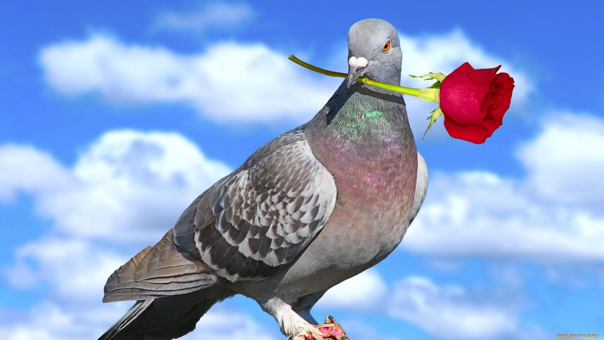 Прощении, открытки про голубей