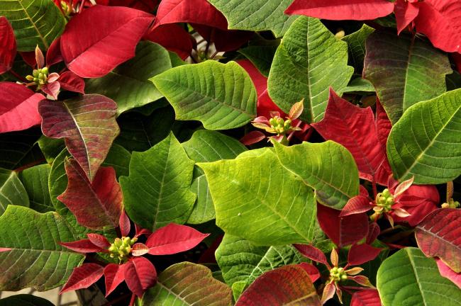 Цветок зеленый на верху красный