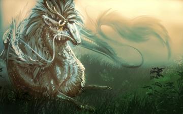 Картинка фэнтези драконы азиатский усы трава дракон арт