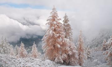 обоя природа, зима, небо, горы, михалюк, сергей, долина, облака, снег, розовые, ели