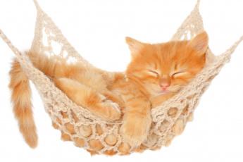Картинка животные коты котёнок гамак рыжий