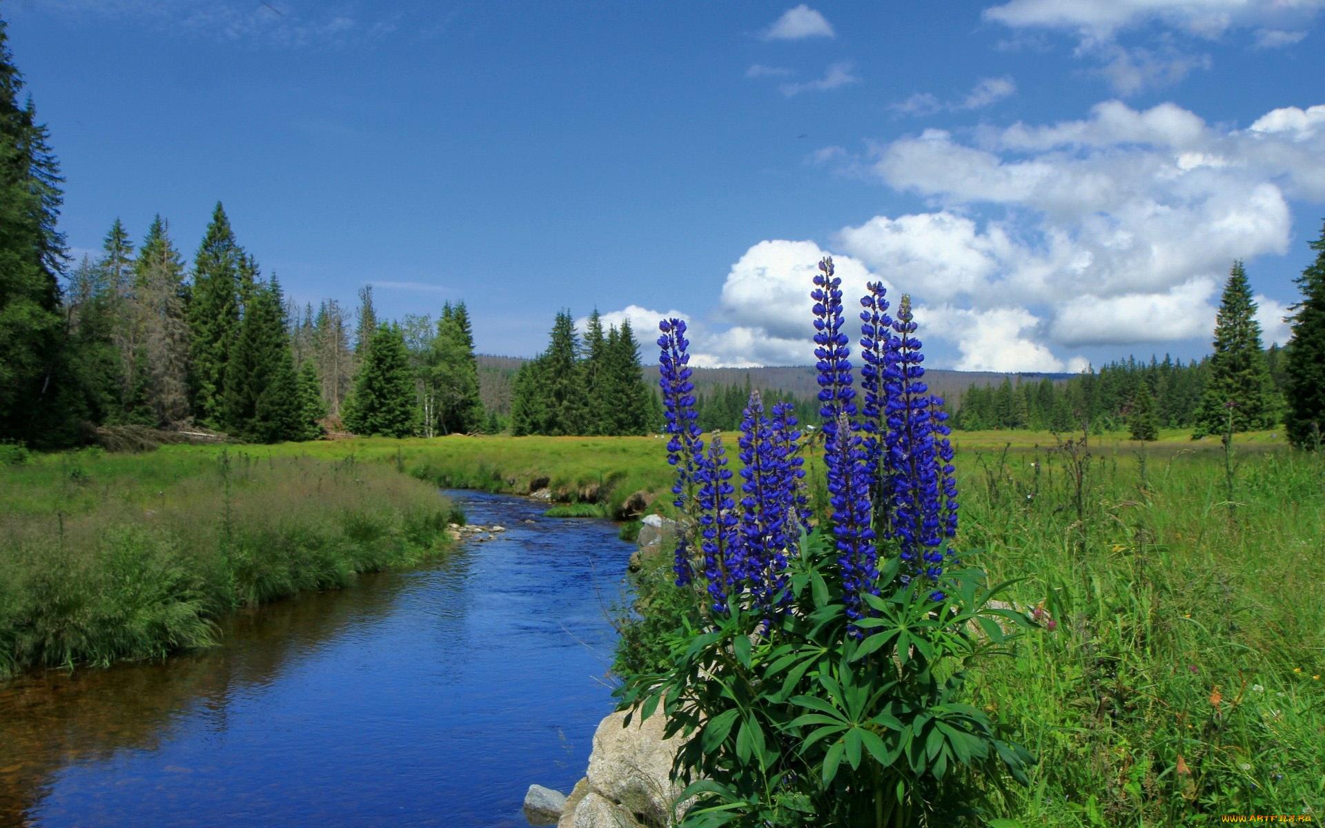 Картинки поля с цветами и речкой