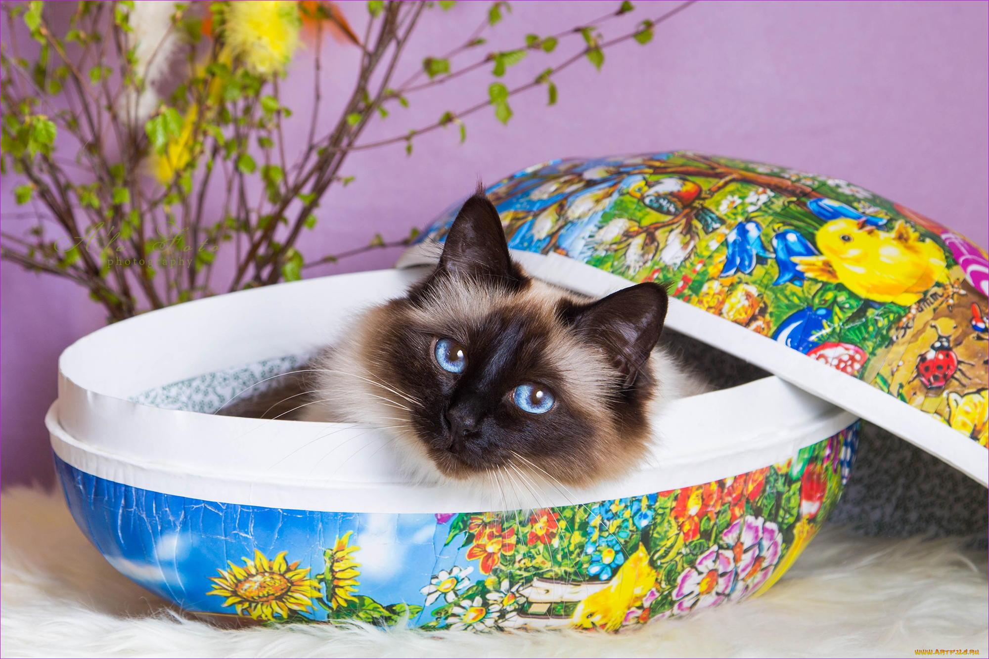 Кот в тарелке загрузить