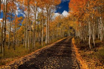 обоя природа, дороги, листопад, листва, осень, березы