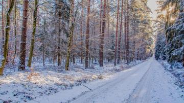обоя природа, дороги, деревья, лес, снег