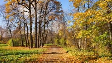обоя природа, дороги, пейзаж, дорога, деревья, лес, осень