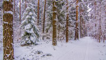 обоя природа, дороги, снег, деревья, лес