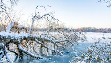 обоя природа, зима, дерево, озеро, водоём
