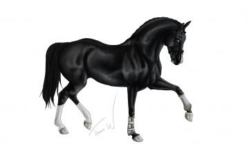 обоя рисованное, животные,  лошади, лошадь