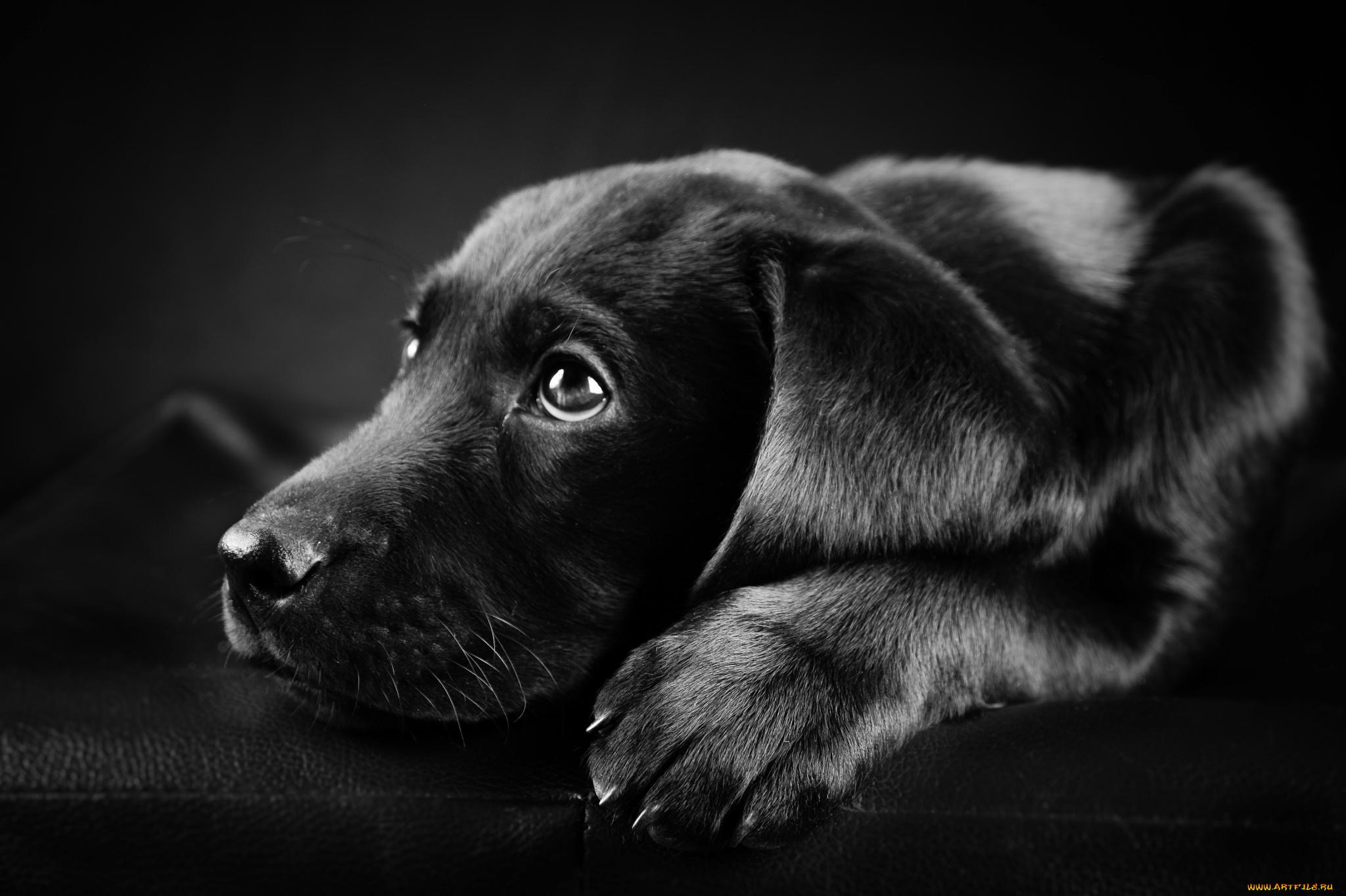 Черно-белый пес на полу  № 1157278 бесплатно