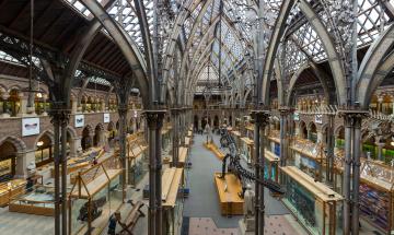 обоя pitt rivers museum,  oxford, интерьер, дворцы,  музеи, музей
