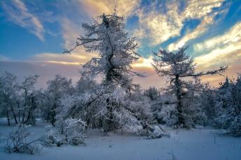 обоя природа, зима, деревья, снег