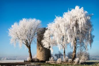 обоя природа, зима