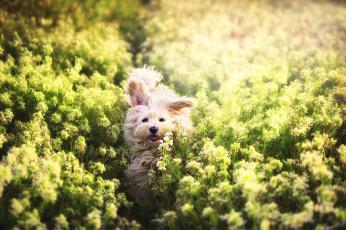 обоя животные, собаки, трава, прогулка, сабака