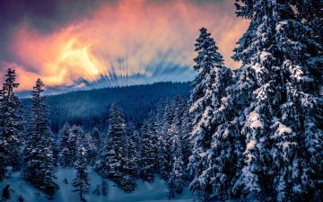 обоя природа, зима, снег, горы, ели, деревья, облака, солнце, лес