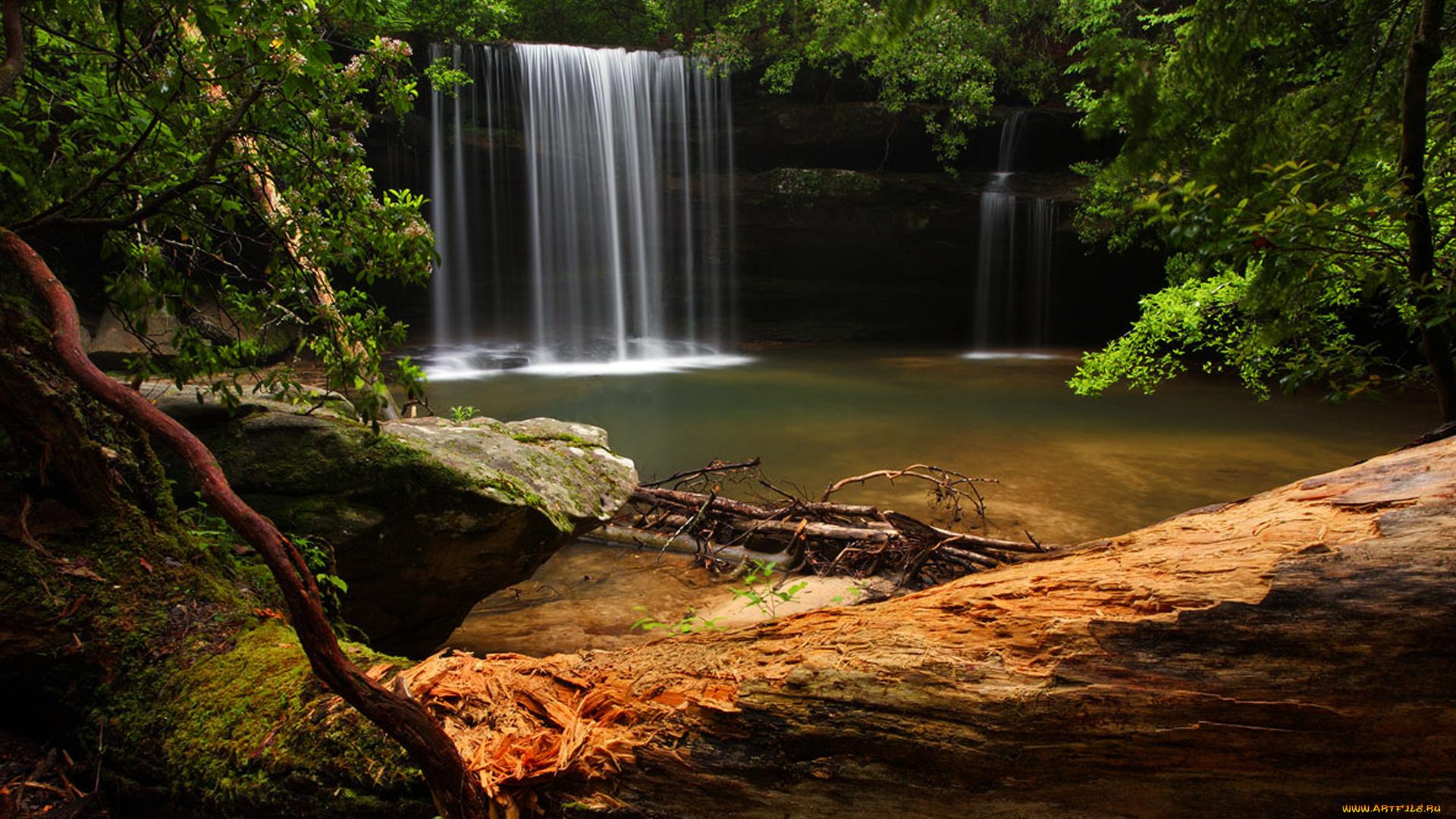 водопад лес деревья обрыв в хорошем качестве