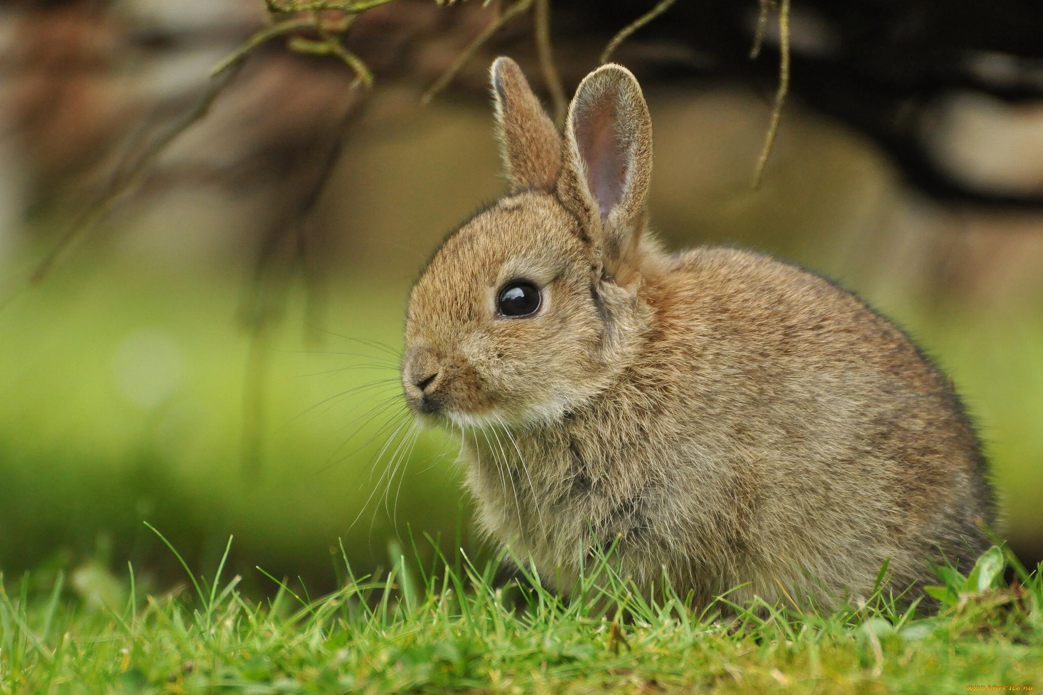 Стихи летию, фото картинки животных для детей