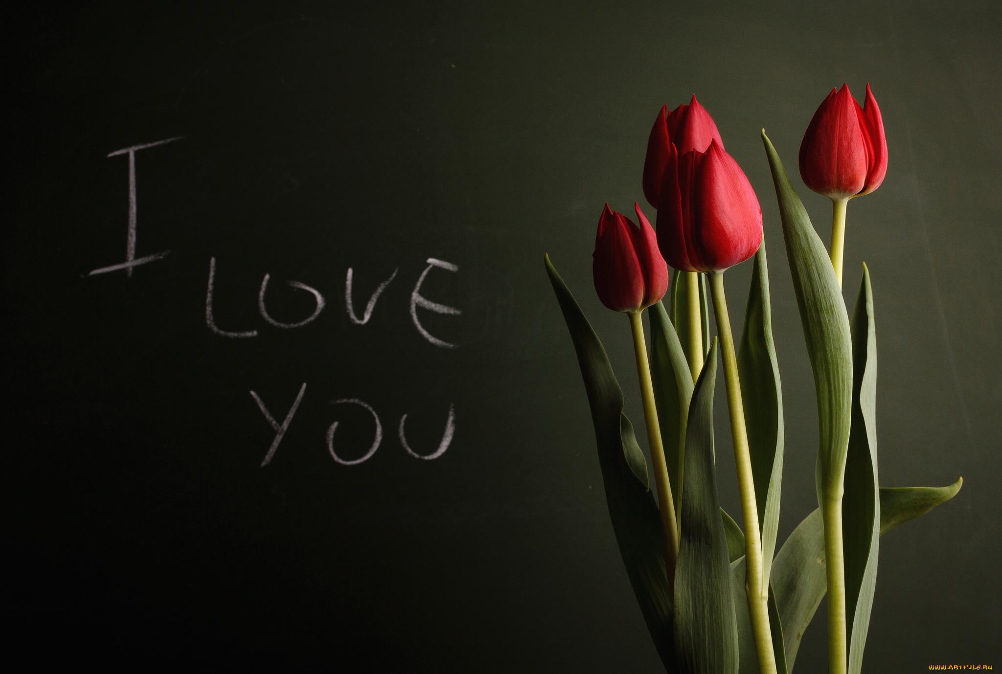 Картинки море, картинки тюльпаны с надписью для тебя