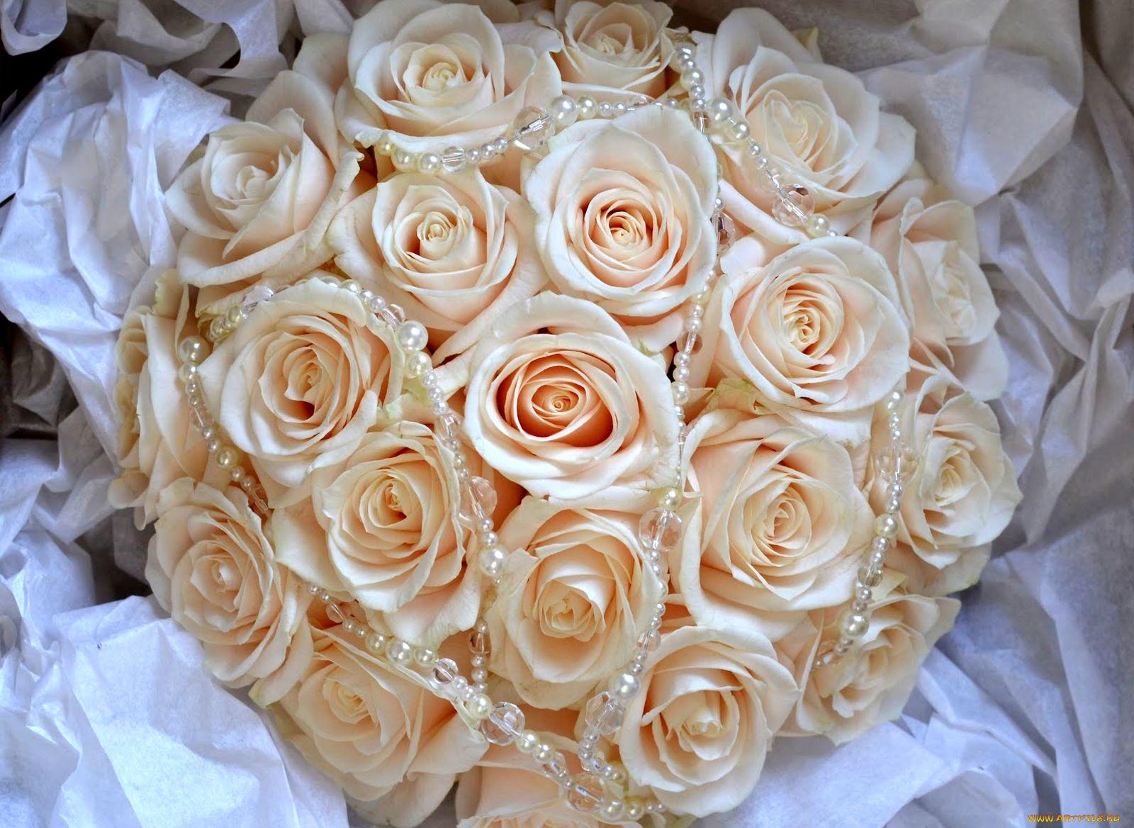 Картинки цветы розы белые и бежевые, картинки картинка надписью
