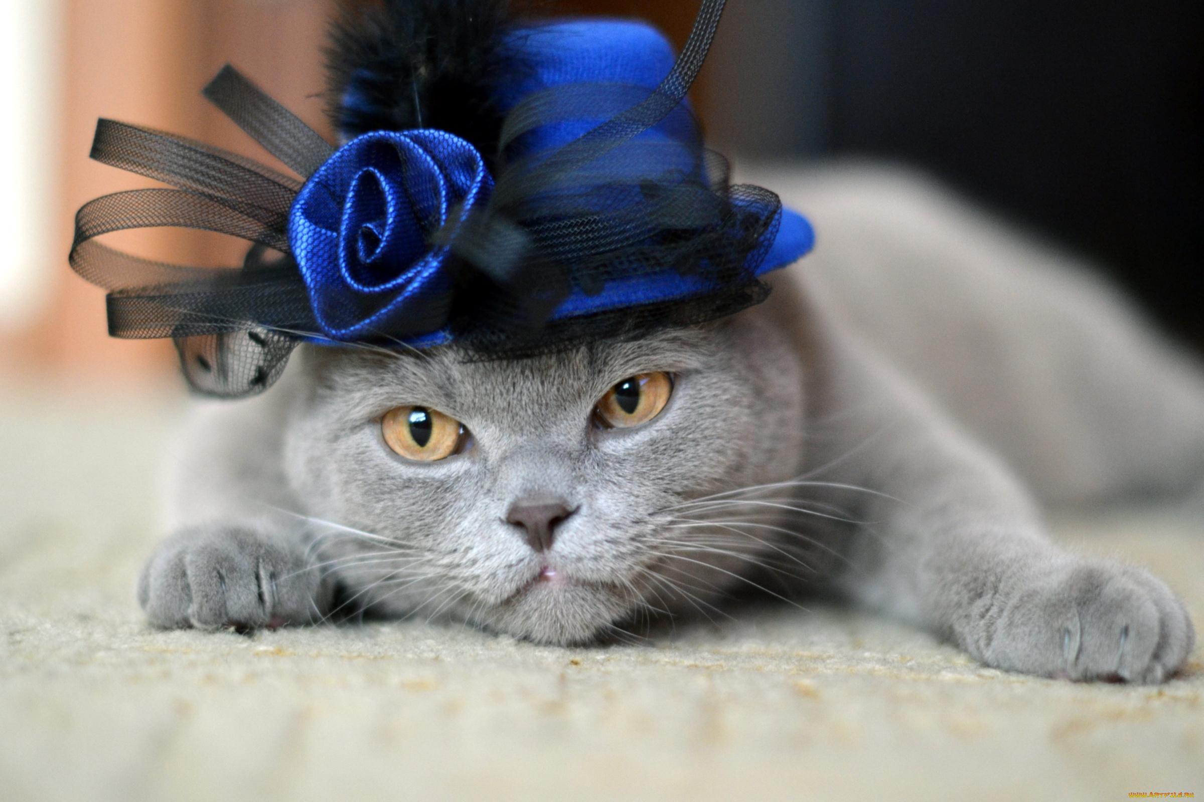 кот соломенная шляпа без смс