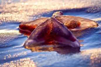 обоя животные, морские звёзды, боке, свет, морская, звезда