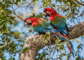 Картинка животные попугаи попугайчики