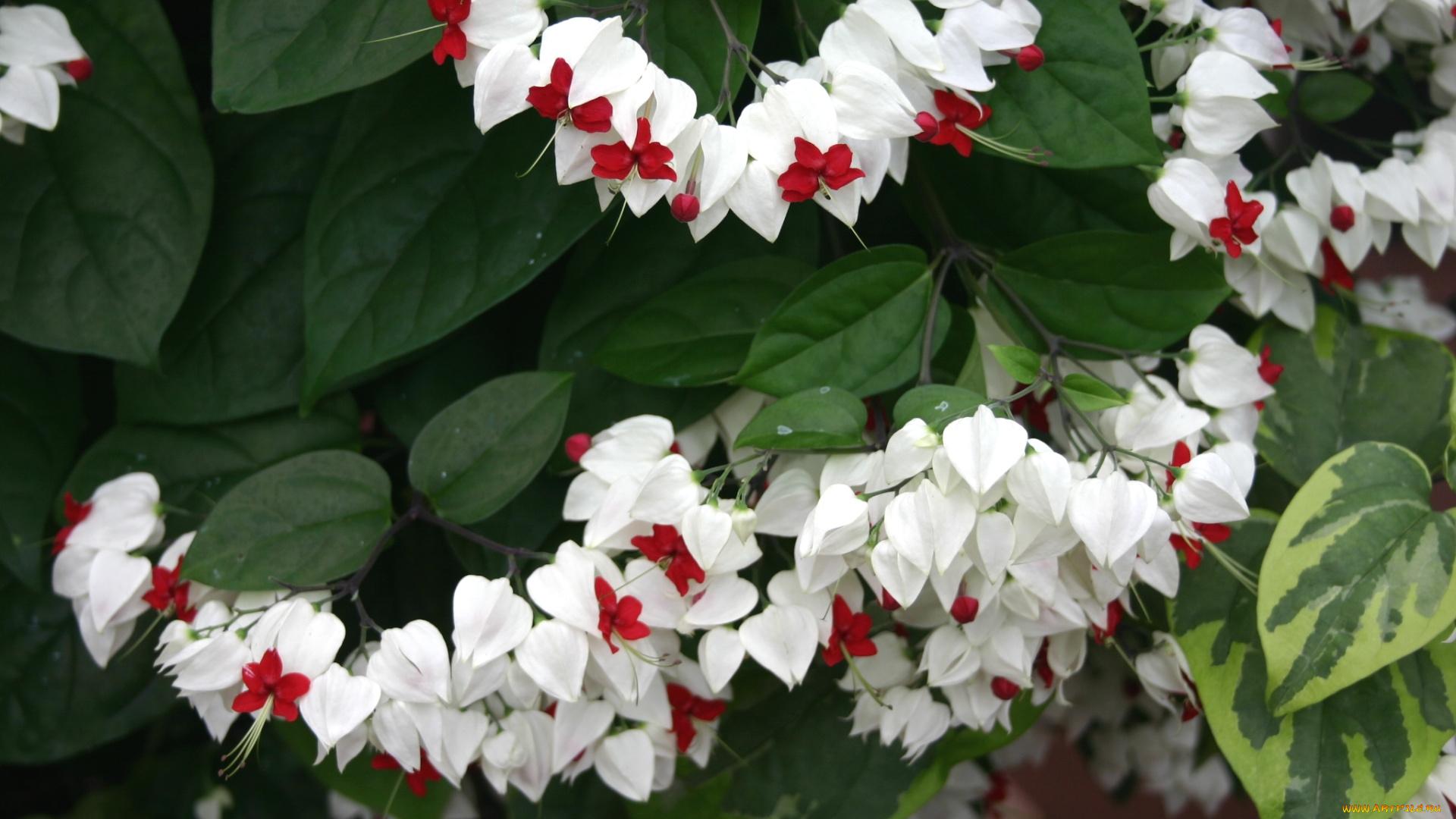 Фото цветов цветущих домашних с белыми цветами