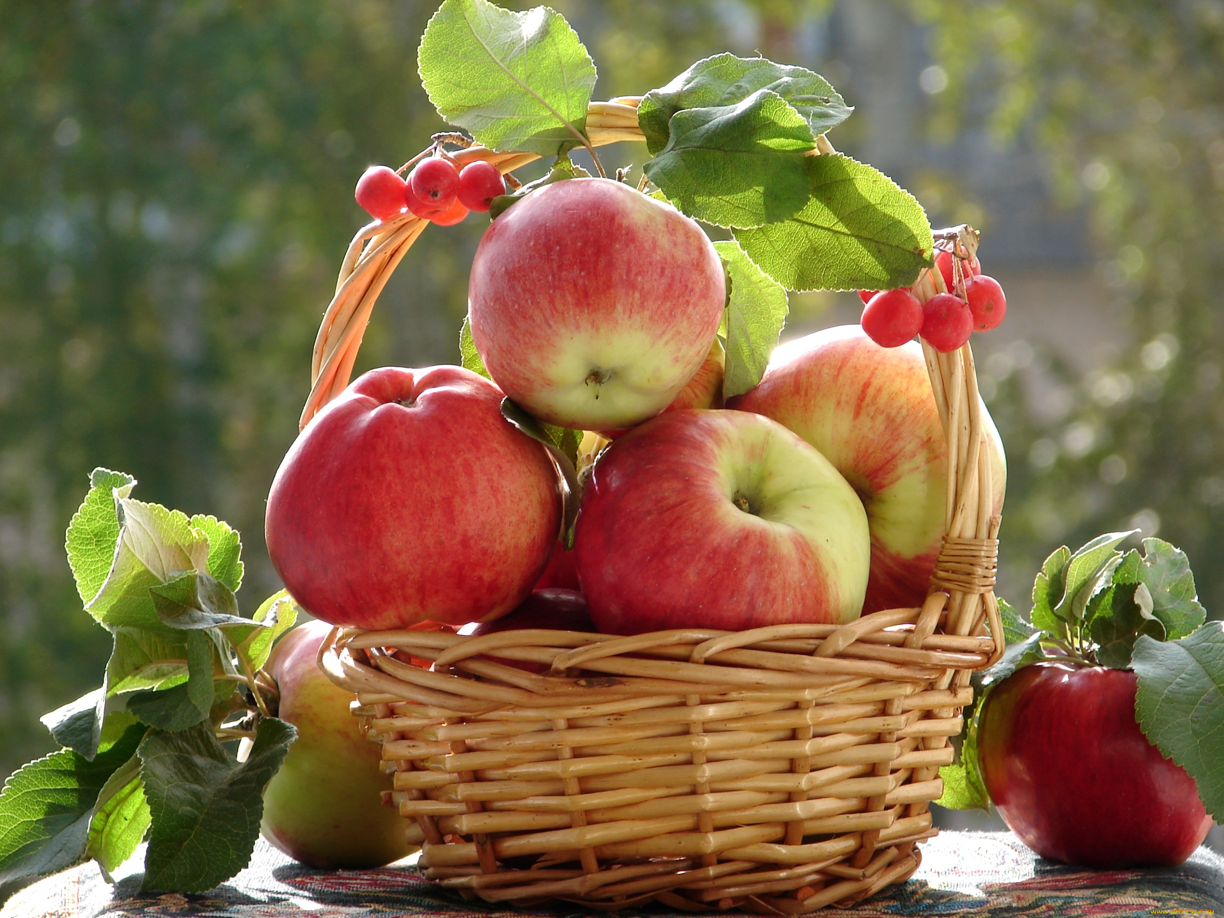 Картинки, яблоки красивые картинки
