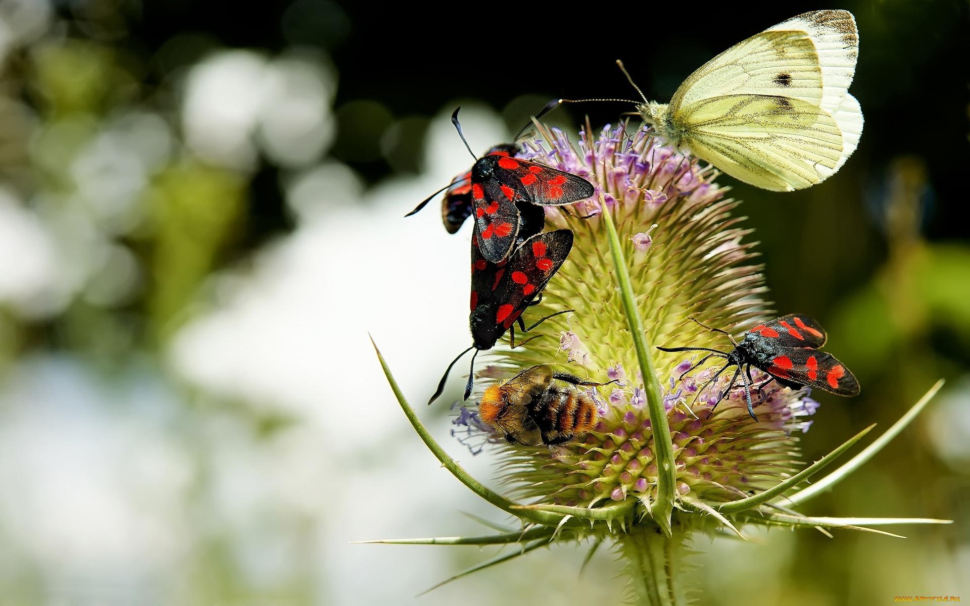 природа макро насекомое бабочка цветы бесплатно