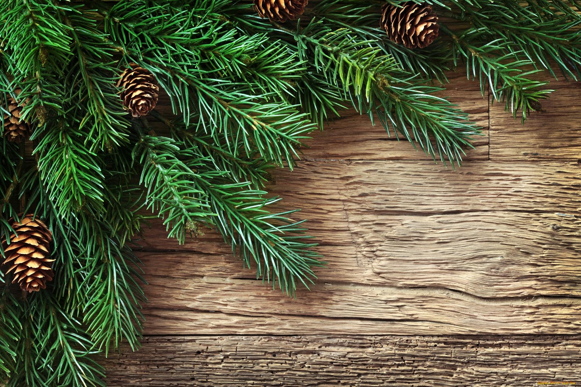 Картинка с еловыми ветками, для фона днем
