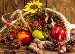 обоя еда, натюрморт, фрукты, дары, осени, орехи, корзинка, цветы, шишки, рябина