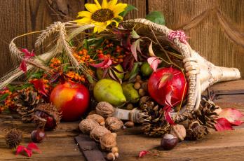 обоя еда, натюрморт, шишки, корзинка, рябина, фрукты, орехи, дары, осени