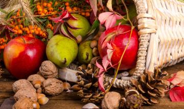 обоя еда, разное, шишки, рябина, фрукты, орехи, дары, осени, цветы, корзинка
