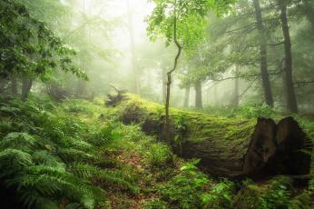 Картинка природа лес туман бревно