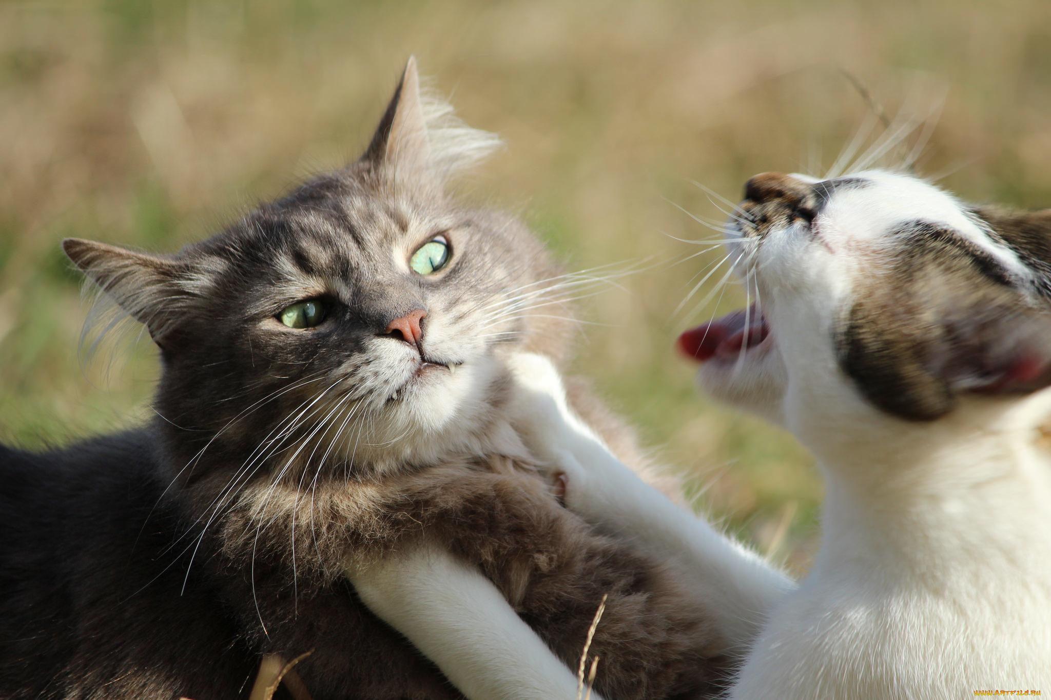 Картинки с говорящими животными