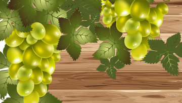 обоя векторная графика, природа , nature, виноград, гроздь, листья